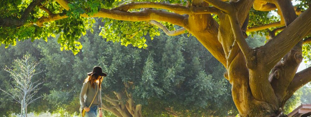 Walking girl under an old tree